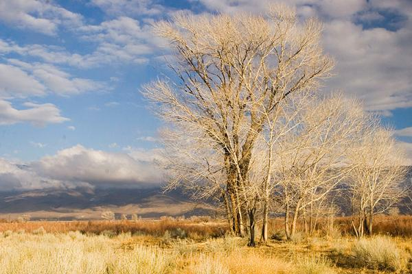 Owens Valley, Owens River, winter, trees, white mountains