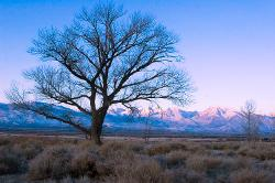 sunrise, trees, mountains, Eastern Sierra, winter