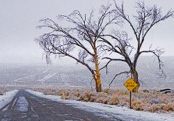 trees, mountains, Eastern Sierra, winter, Bishop, cattle range, road, snow