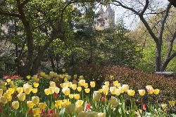 New York, Central Park, flowers, tulips, trees, urban, towers, garden