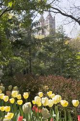New York, Central Park, tulips, flowers, trees, urban, towers