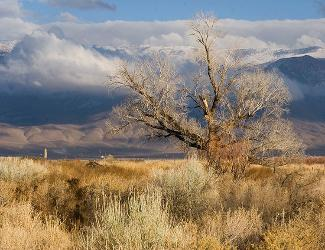 Owens Valley, Bishop, trees, winter, Owens River, mountains