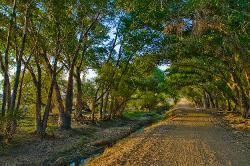 road, ditch, spring, sunset, trees, dirt road, irrigation
