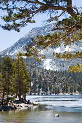 Eastern Sierra, fishing, trees, mountains, water