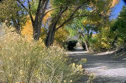 trees, Eastern Sierra, summer, Independence, road