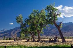 tree line, Bishop, Owens Valley, mountains, Eastern Sierra, pasture